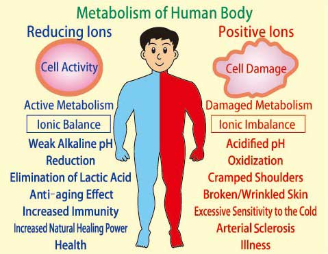 diseases of the human body – citybeauty, Muscles